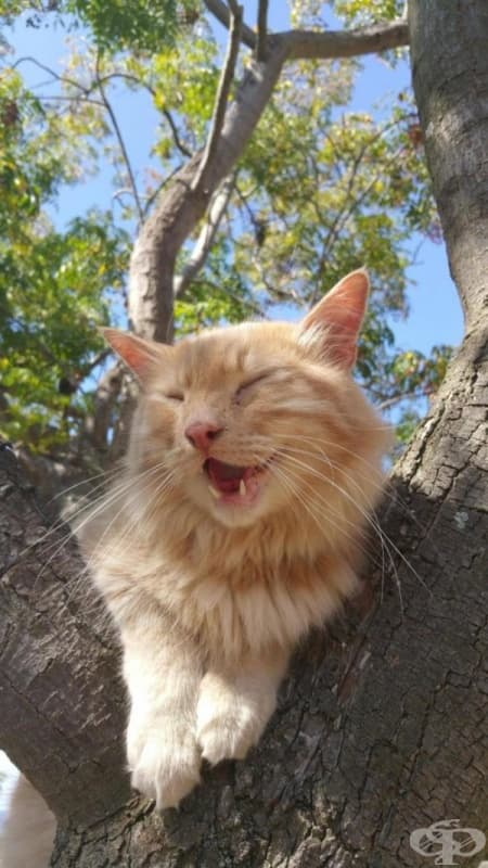 """""""Нашата котка се качи на дървото за първи път."""""""