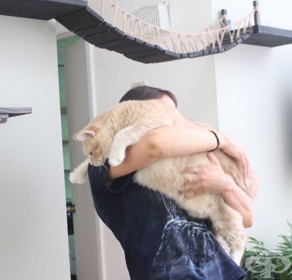 Бронсън все още не е готов да тества мебелите заедно с другите две котки - Майк и Мегън.