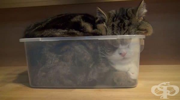 Интересно как такава голяма котка се е поместила в малката кутия.