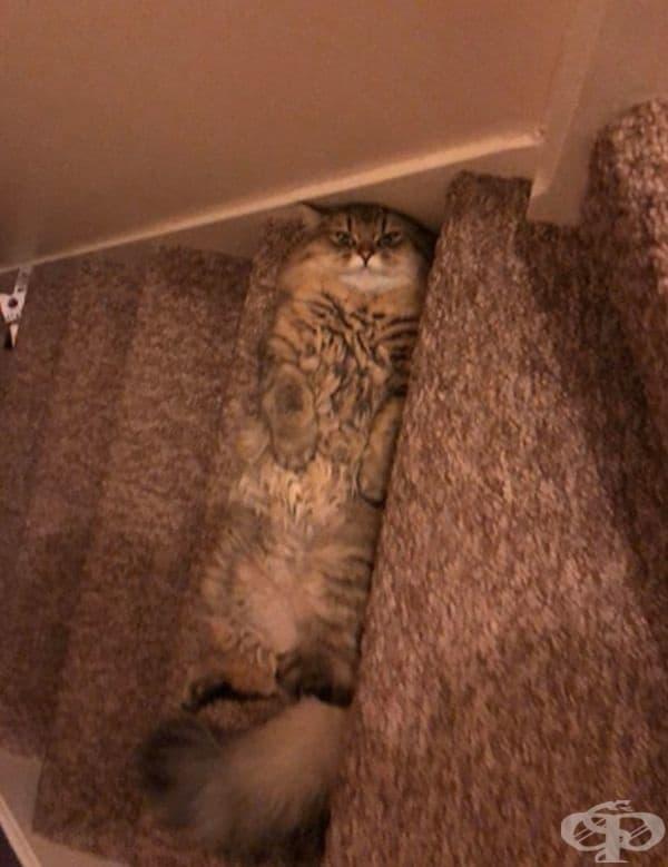 """""""Моята котка Фъргюс обича да се изляга на стъпалата към втория етаж на къщата."""""""