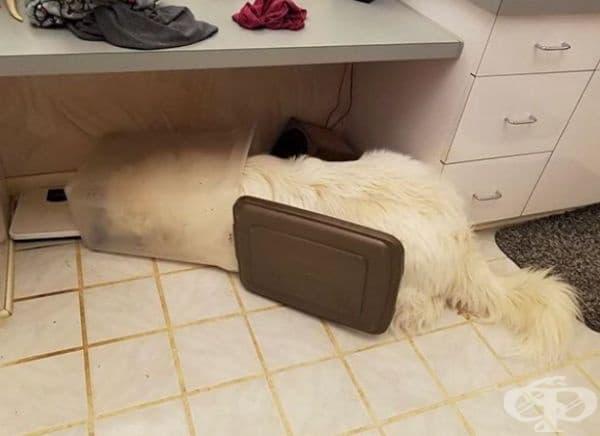 Нарушителят е отворил кутията, изял е всичката храна и е заспал на местопрестъплението.