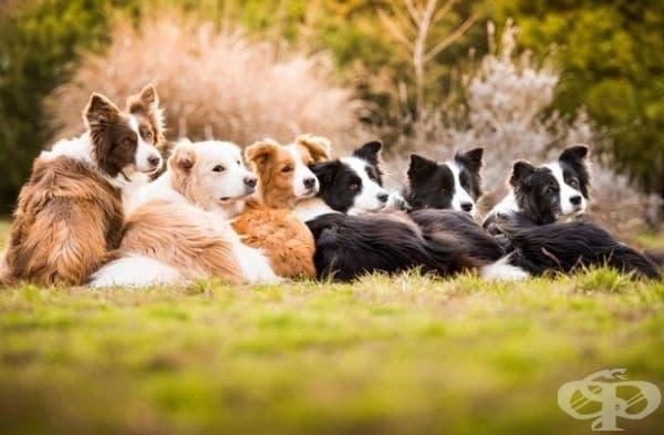 """Победител в категорията """"Обичам кучетата"""". Фотограф: Тамара Кедс."""