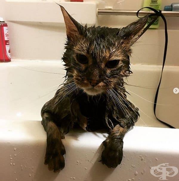 """""""Нещастен и мокър съм!"""""""