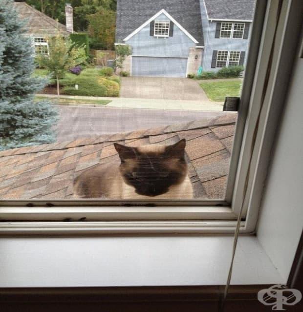 """""""Чух слабо мяукане пред предната врата… това не е моята котка, а аз живея на втория етаж."""""""