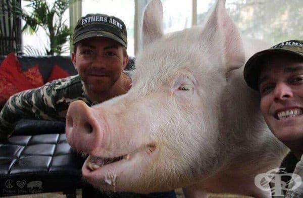 То промени възгледите на стопаните към животните въобще.