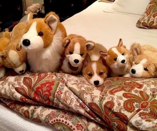 Кое е истинското куче?