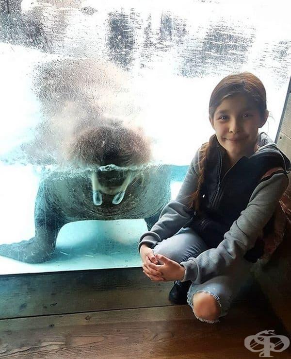 Този морж не е срамежлив!