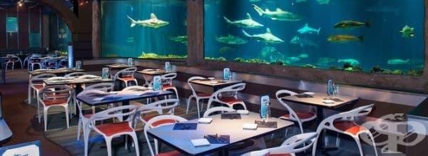 """Ресторант """"Sharks Underwater Grill"""", Орландо, Флорида. Вкусна храна. Море от акули. В близост до Disney World. Какво друго му трябва на човек?"""