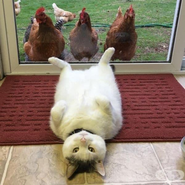 И не, котките никога не изпитват срам.