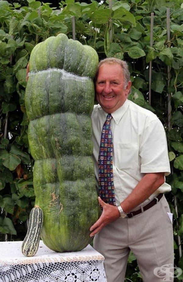 Питър Волс държи 51-килограмова тиквичка, израснала за 6 седмици.