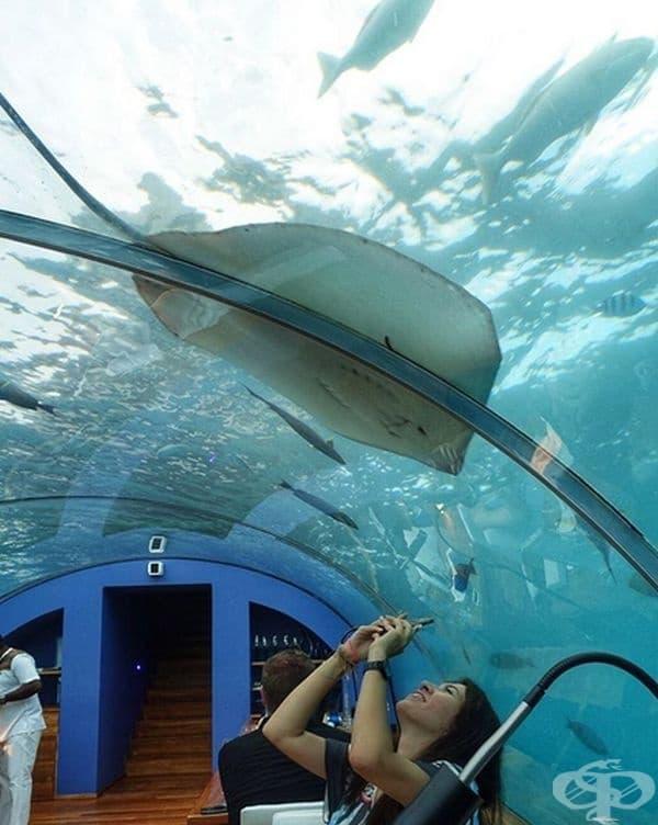 Това е страхотна възможност за хората, които мечтаят да видят морския свят, но се страхуват да се гмуркат.