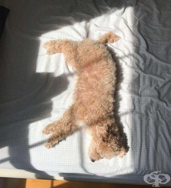 Кучето лежи точно в полето на слънчева светлина.