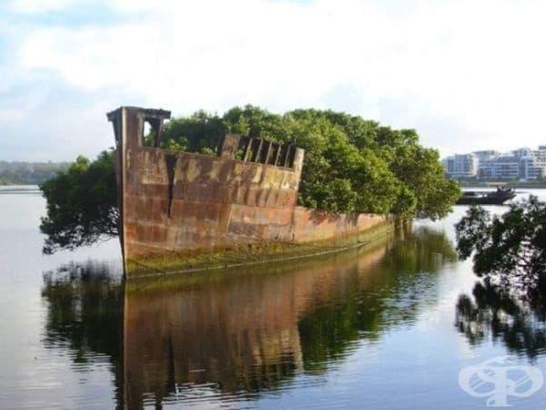 102-годишен изоставен кораб, Сидни, Австалия.