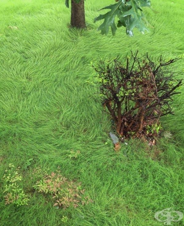 Дъжд превръща двор в картина на Ван Гог.