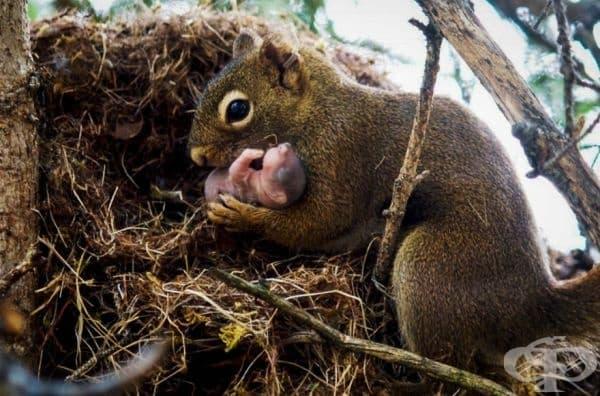 Мама катерица и нейното бебе.