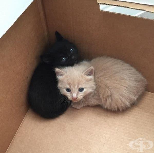 """""""Намерихме тези две сладки котенца днес и понеже никой не ги искаше аз и съпругата ми решихме да ги отгледаме вкъщи""""."""