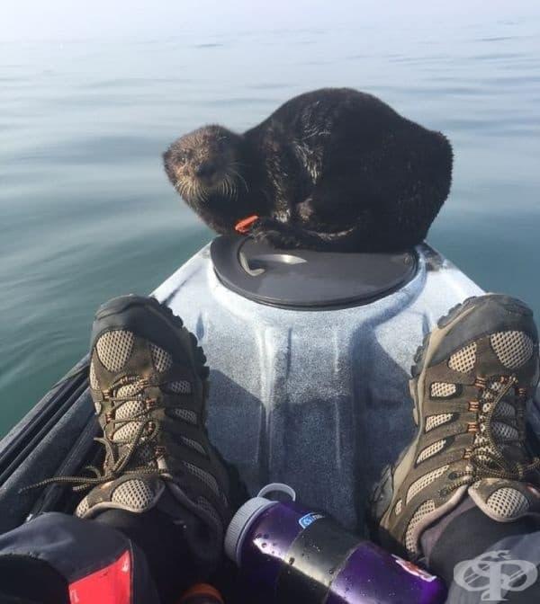 Току-що се качих на моята лодка, когато този приятел реши да си почине.