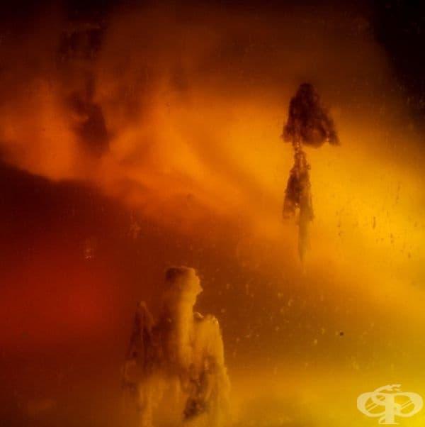 Снимка на космическа мъглявина? Не, просто чаена гъба (комбуча).