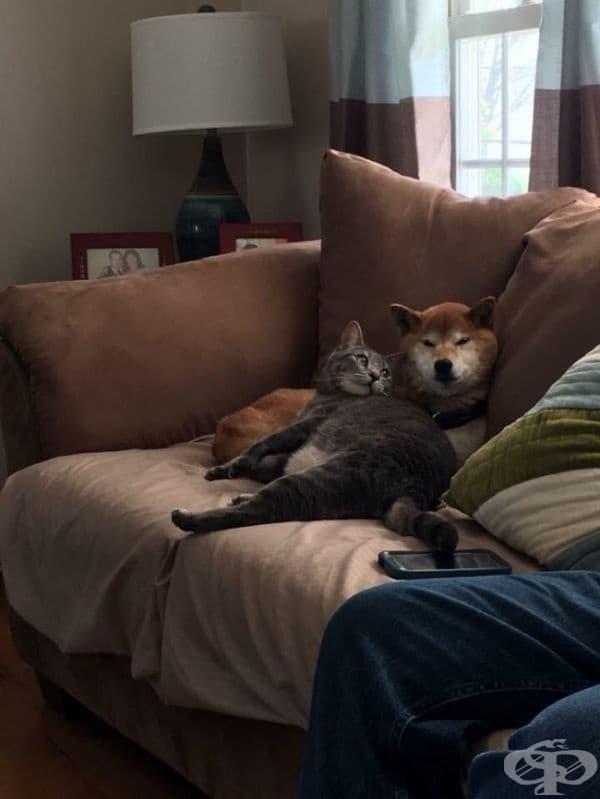"""""""Мечтая някой да ме гледа така, както моята котка гледа кучето."""""""