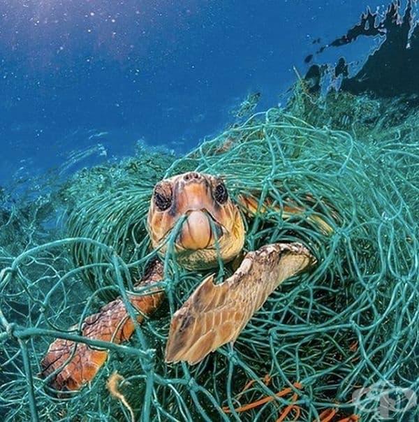 Когато морския свят се сблъска със света на човека.