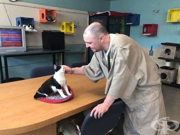 """""""Котките ги учат на отговорност и как да взаимодействат в група, използвайки ненасилствени методи за решаване на проблеми. Домашните любимци им дават безусловната любов - нещо, което много от тези затворници никога не са чувствали."""""""