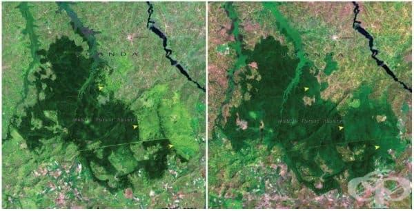 Гората Мабира, Уганда (ноември 2001- януари 2006).