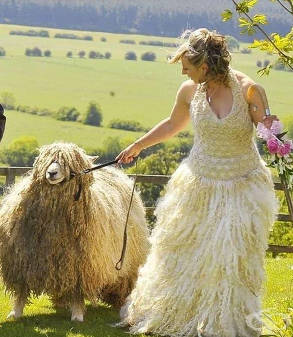 От любов към овцата.