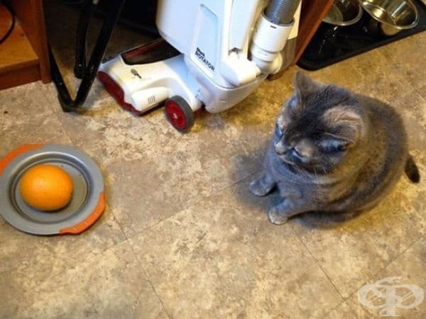 Помолих моят по-малък син да нахрани котката.