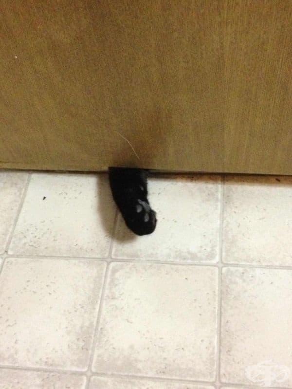 """""""Пусни ме! Искам да вляза! Тогава мога... незабавно да изляза!"""""""