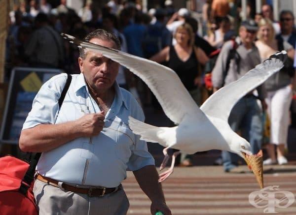 Чайка краде сладолед от ръката на минувач.
