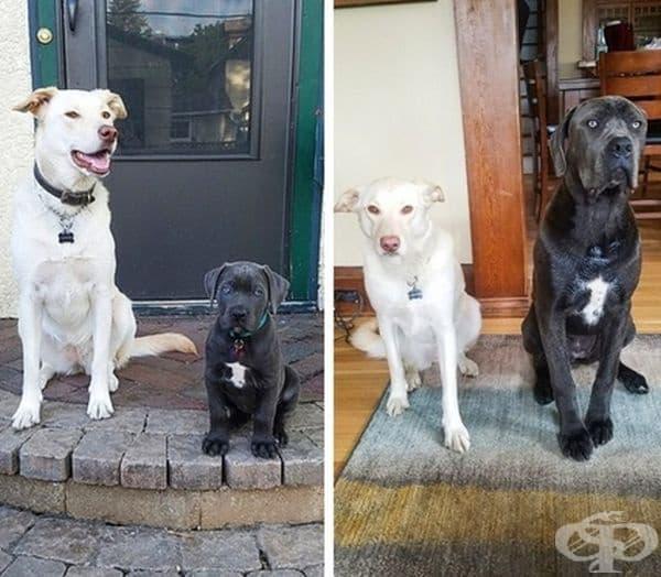 """""""Моето куче до кученцето на майка ми. Снимката е направена с 8 месеца разлика. Емоцията е очевидна."""""""