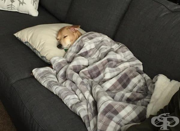 """""""Когато влязох в стаята открих кучето си да спи по този начин, точно като мен. Интересно как се е справило само!"""""""