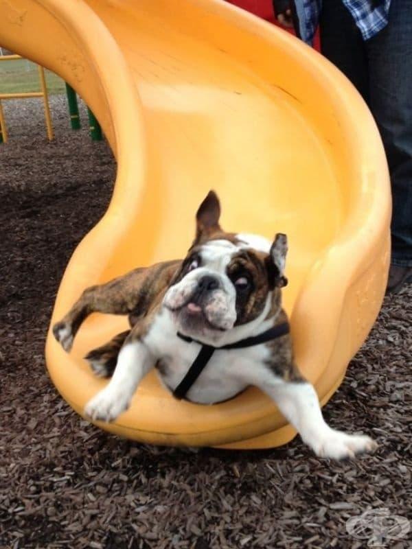Това куче за първи път се спуска от пързалка.