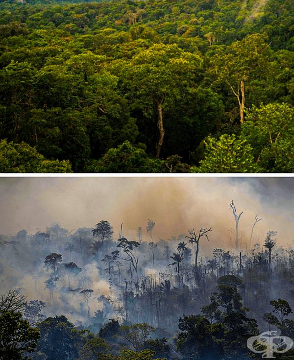 Горите по целия свят горят, а това е резултатът при Амазонка.