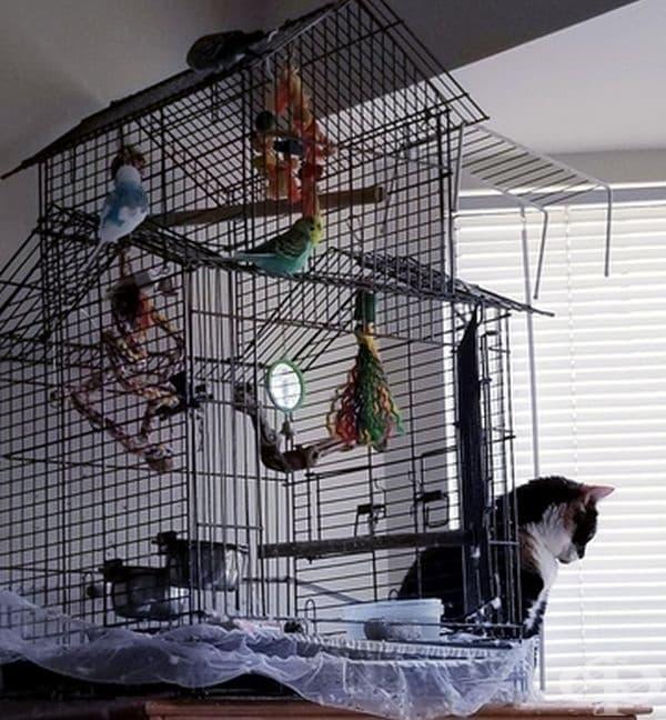"""""""Котката ми наблюдава птиците през щорите, но не обръща внимание на 4-те папагала зад нея."""""""