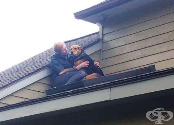 Докато е преследвал котката е стигнал и до покрива. Преди слизане се е наложило малко успокоение.