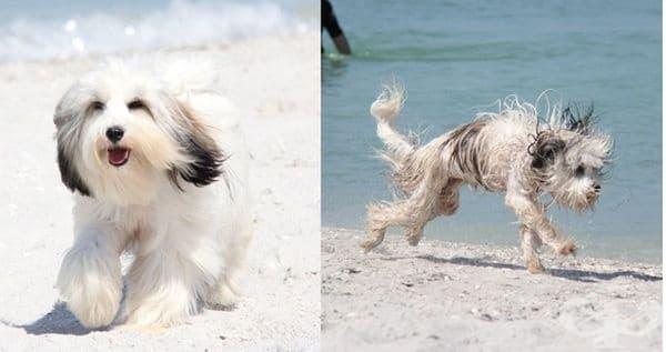 Играта на плажа има своите предимства, но и своите недостатъци.