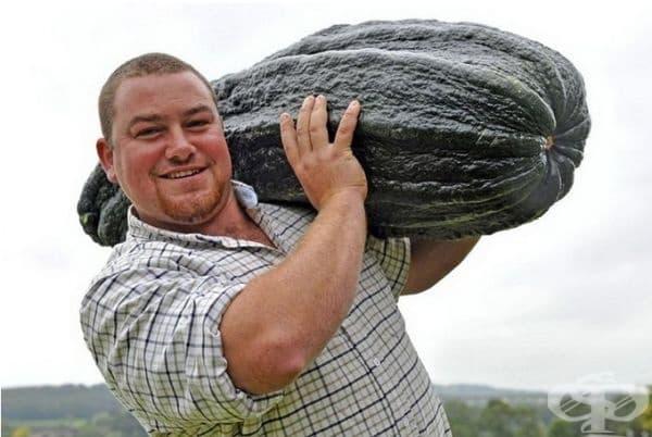 Победителят в конкурса на най-големите тиквички на панаира на градинарството в Йоркшър е станал Джо Атертън от Обединеното кралство, който е представил зеленчук с тегло 44 кг.
