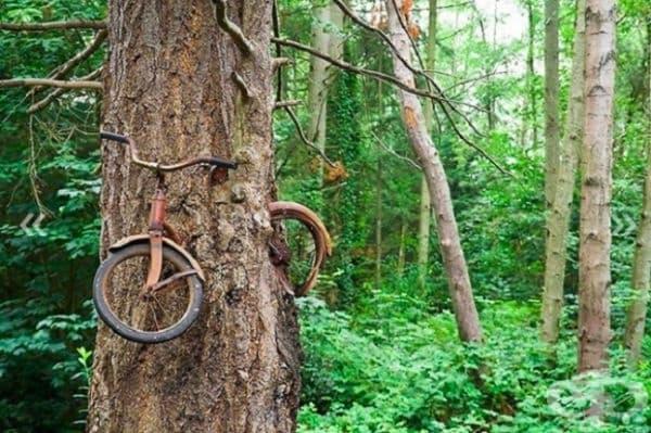 """Велисипед, """"изяден"""" от дърво, остров Вашон, Вашингтон, САЩ."""