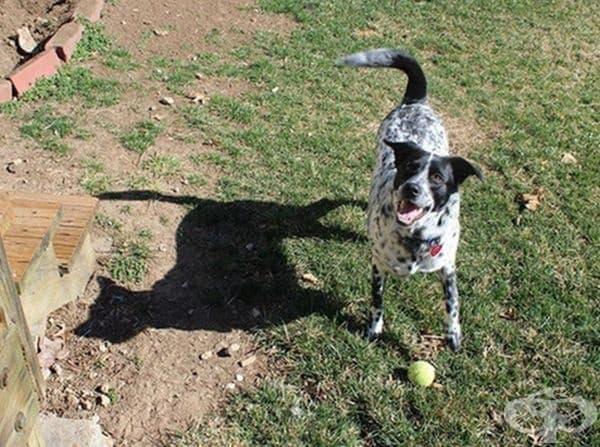 Единственото в света куче със сянка на котка.