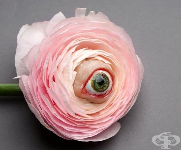 Брошка - око в цвете.