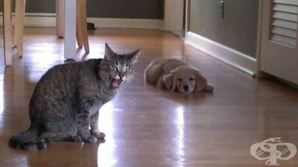 Тази котка вероятно е малко разстроена заради новия съсед.