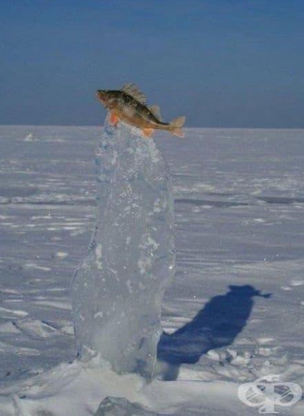 Замръзнала риба в скок.