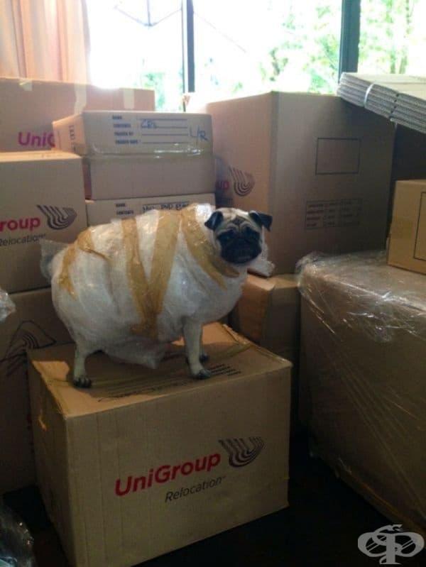 """""""Казах на сестра ми да опакова всички неща, преди да се преместим."""""""
