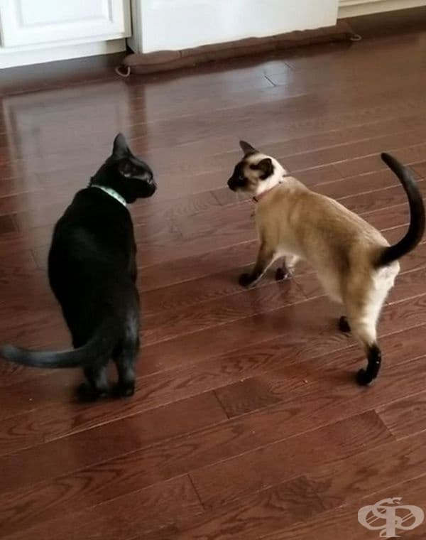 Котките мяукат на хората, но не и на други котки. Мяукането се използва за комуникация с хората. За да общуват помежду си, котките използват аромат, езика на тялото, изражението на лицето и докосването.