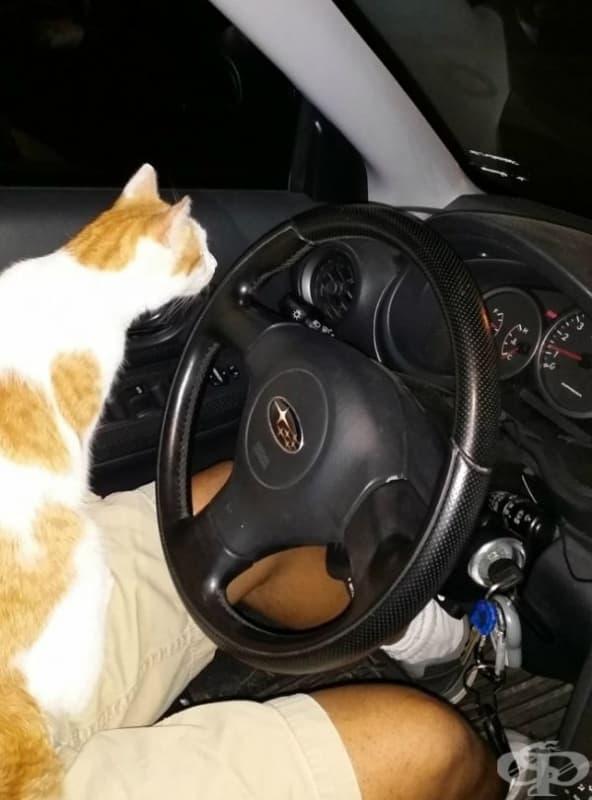 Нямам котка. Тази просто скочи в колата ми и не ми позволи да си тръгна без нея. Това ли означава да си вземеш котка?