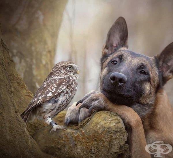 Двойка приятели.