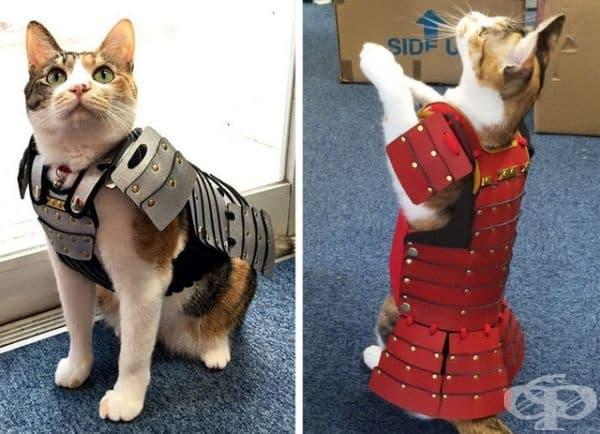 Самурайски доспехи за котки.