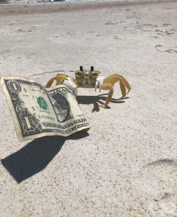 И раците вече събират намерени пари.