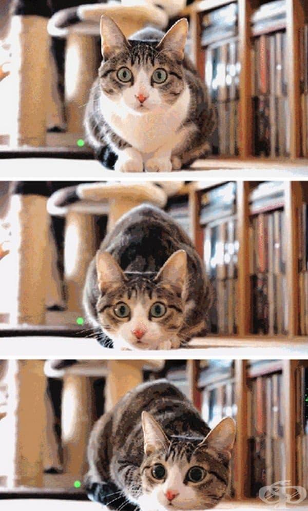 Котките са много чувствителни към вибрации. Могат да усетят земетресение 10-15 минути, преди хората.